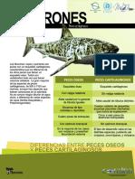 folletos_Tiburon.pdf