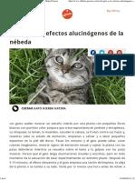 El Gato y Los Efectos Alucinógenos de La Nébeda Affinity Petcare