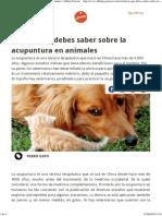 Todo Lo Que Debes Saber Sobre La Acupuntura en Animales Affinity Petcare