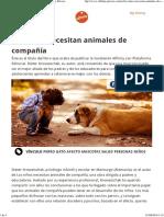 Los Niños Necesitan Animales de Compañía Affinity Petcare