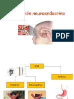 Estress y Regulacion Neuroendocrina