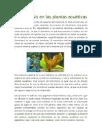 Fotosíntesis en las plantas acuáticas.docx