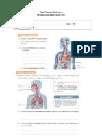 Guía Corazón y Pulmones