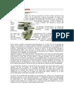 153482620-El-Craneo-Punin.docx