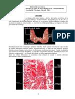 18.2 - Teórico de Endócrino 3 Tiroides