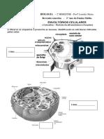 Exercciosdefixao Envoltrios 130521174355 Phpapp01