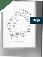 Poltronieri, Nerina - Lezioni di Teoria Musicale (estratto).pdf