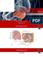 2. Bazo - Patologías Asociadas