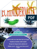 Achinodermata