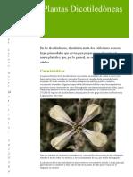 plantas dicotiledóneas