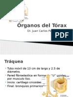 Órganos del Tórax.pptx