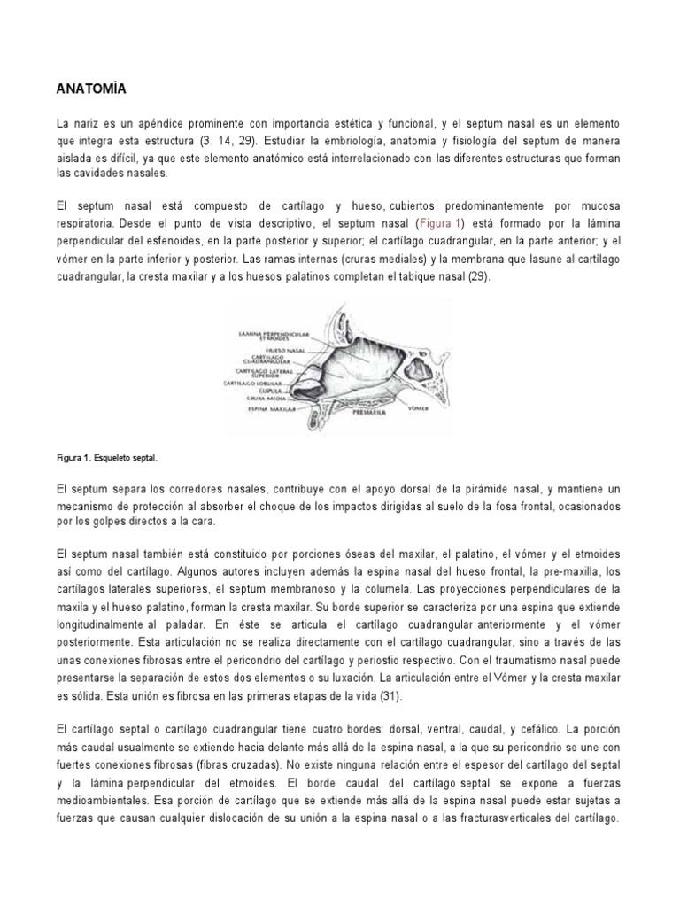 ANATOMÍA y FisiologiaNATOMIA