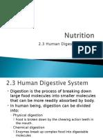 2.3 digestive system 2003.ppt