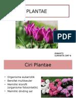 plantae-131225210338-phpapp02