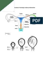 Perubahan Anatomi Fisiologi Selama Kehamilan