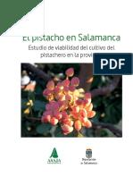 Estudio Pistacho Salamanca