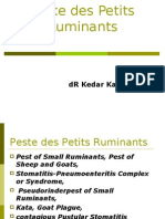 An Introduction to Peste des Petits Ruminants