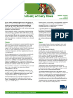 Acetonaemia Ketosis of Dairy Cows