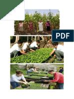 Desarrollo Ambiental en Mexico Imagenes