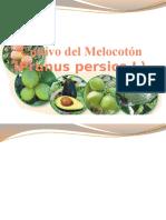 Cultivo Del Melocotón