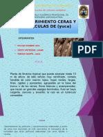 Recubrimiento Ceras y Peliculas de (Yuca)
