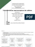 Informe Morfología Colonial