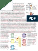 Renal, Fluids and Acid-Base Notes (Chris Andersen, ICUPrimaryPrep.com)