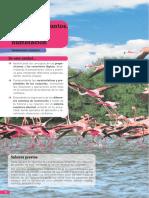 proyecto SE Matematicas 6 unidad 1
