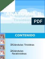 Anatomía II Glándulas Tiroideas y Paratiroideas