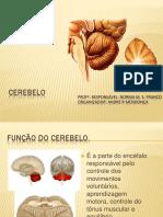 06_cerebelo.pdf