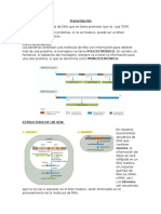 Transcripcion del DNA