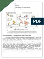 4°-Guía de estudio- Sistema inmune