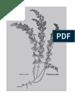 177634770-The-Energetics-of-Western-Herbs-by-Peter-Holmes.pdf