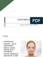 Anatomía de Cara