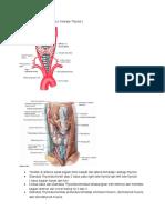 Anatomi Glandula Thyroidea