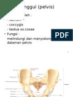Tulang Dan Persendian Extremitas Inferior