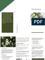 Manzanilla Yesenia1