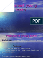 Permanent Young Teeth Pedo