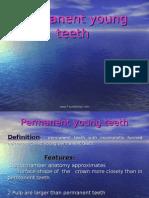 Permanent Young Teeth Pedo