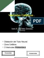 4.Embriologia (1)