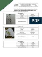Datos Herbáceas-Ecologia