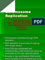 Chromosome Replication