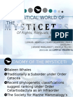 The Mystical World of Mysticetes Cv