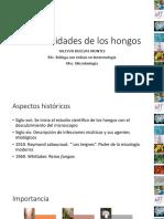 hongos-neralidades-2016.pdf