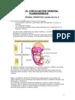 Sistema Venoso embrion