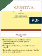 Conjuntiva Clase Fac Med
