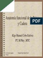 Anatomía Funcional de La Pelvis y Cadera