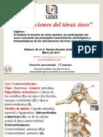 articulaciones del torax