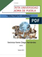 Ensayo acerca del Maltrato Animal