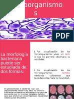 Coloración de Microorganismos
